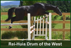 Stallion Rei-Huia Drum of the West